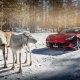 Ferrari am Arctic Circle